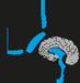 Neuroendo